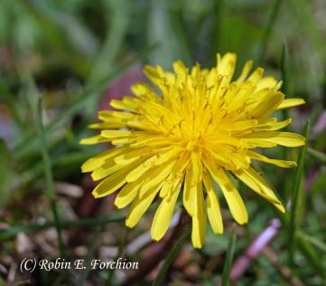 Weed or Flower