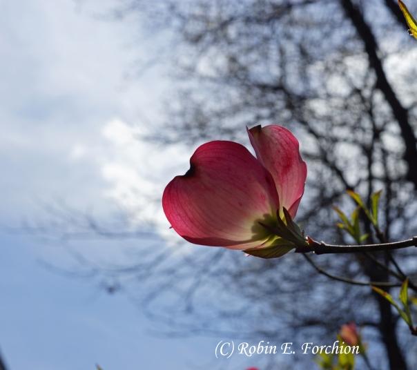 To the sky I grow.