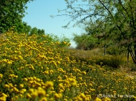 Valley of yellow