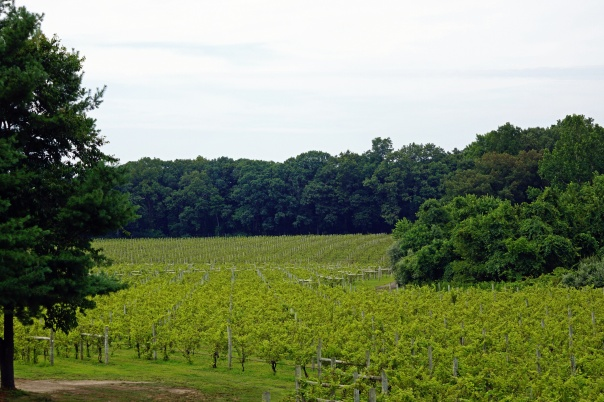 Over 47 Acres of Grapes. Each plant can create at least 3 bottles of wine.