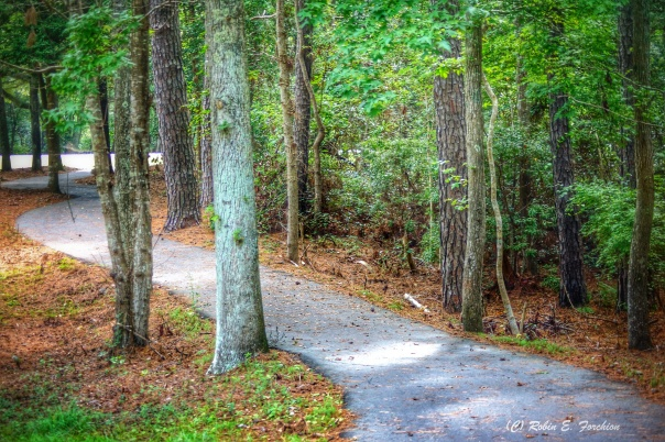 Pathway leading to the ultimate goal.