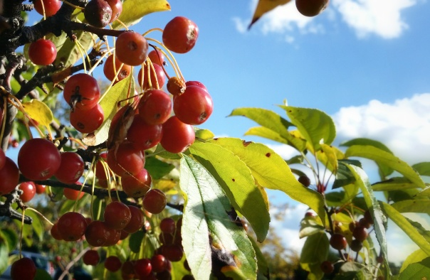Thru the Berries