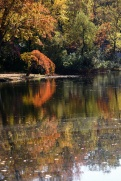Autumn Reflections 2