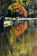 Autumn Reflections 4