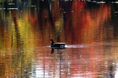 Autumn Reflections 5