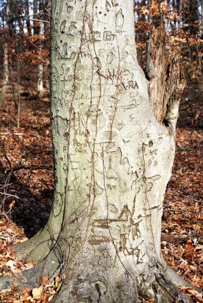 Love Tree 3