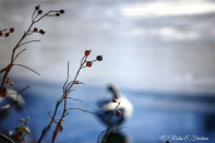 Foreground in focus