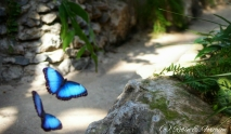 Although the image is not the greatest. I like the way that the butterflies are flying