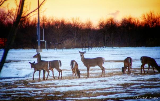 Wheres Bambi?