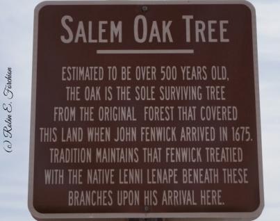 Old Oak Tree1