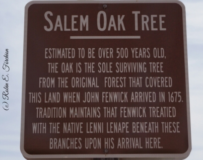 Old Oak Tree1