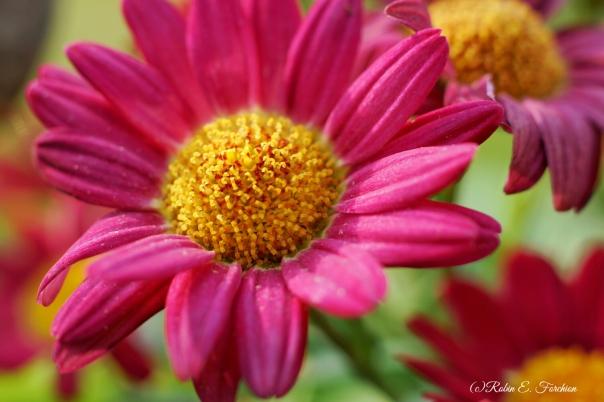 floweroftheday1