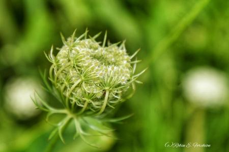 -Weeds 2-