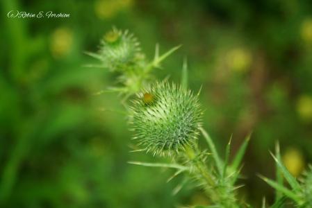 -Weeds 3-