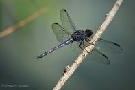 dragonfly4