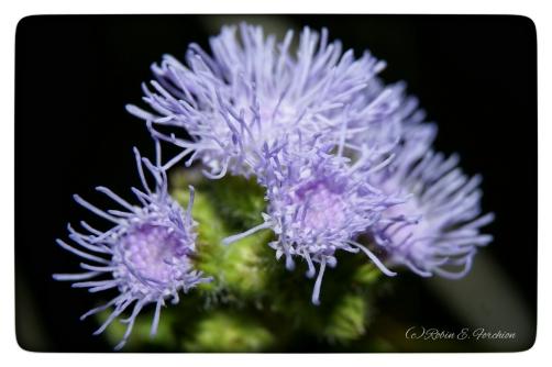~~ Coral Reef or Flower? ~~