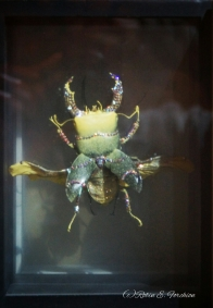 Jewelery encrusted beetle