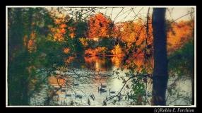 autumn colors 15