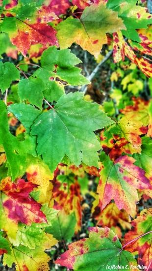 Tye Dyed Leaves