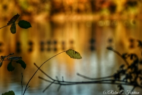 autumn colors 23