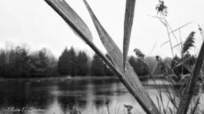 rainy days3
