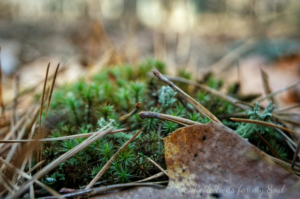 On the forest floor-2