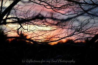 sunset 3 3-17-16