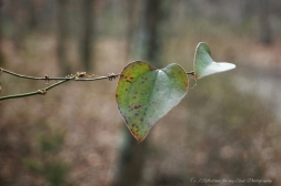 Speckled leaf