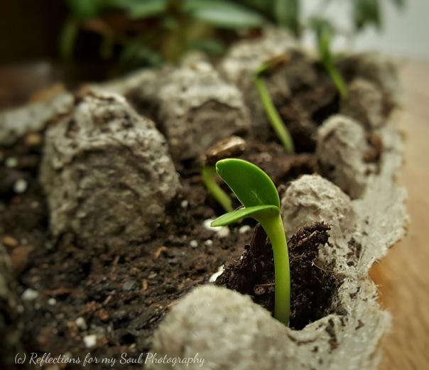 arai with new plant2
