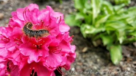garden visitiors2