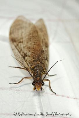 bug25