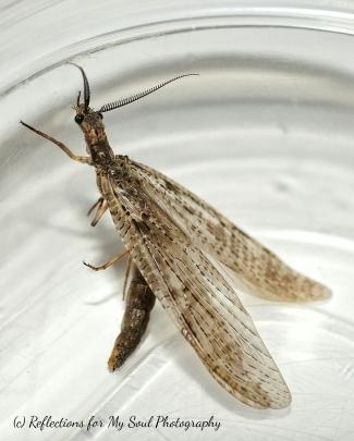 bug26