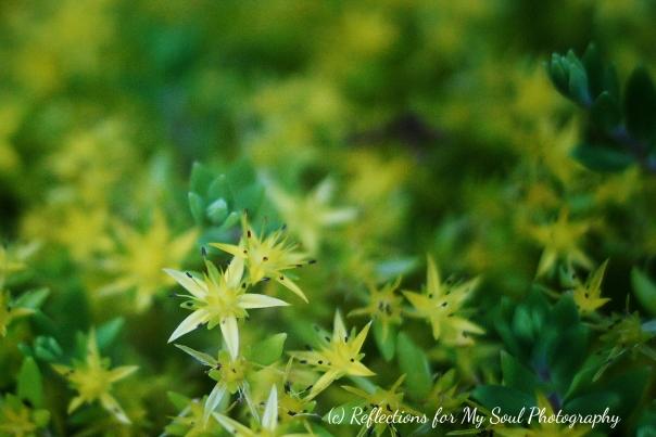 yellow star1