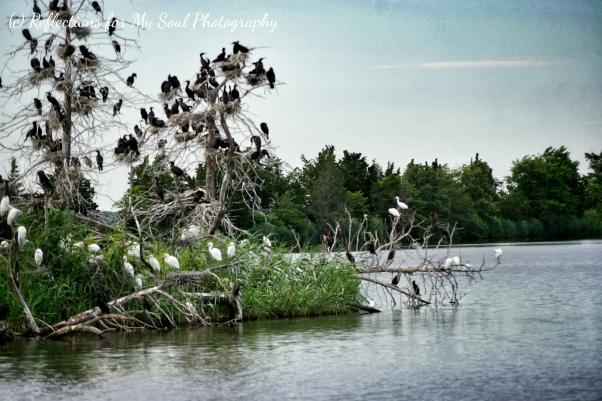 dayofthebirds2