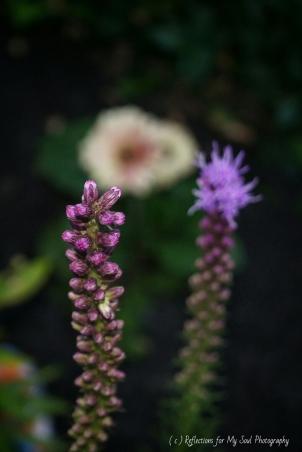 flower9900
